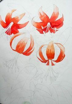 [꽃풍경수채화] 나리꽃 - 수채화 과정 (아르쉬. Rough) : 네이버 블로그
