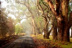 Country Road in Autumn - Warragul, Gippsland, Victoria | Flickr - Photo Sharing!
