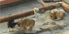 Cyprus needs to reflect on the plight of animals on the island
