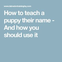 How to teach a puppy their name - And how you should use it
