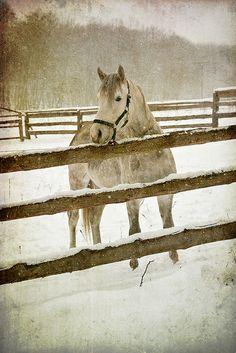 theequus:    Winter walk by miloshaaa on Flickr.