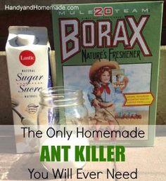 DIY Homemade Natural Ant Killer Recipe by MyohoDane