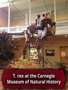 One of the world's most complete T. rex fossils is at the Carnegie Museum of Natural History in Pittsburgh, Pennsylvania. Click to learn more: http://uncoveringpa.com/carnegie-museum-natural-history