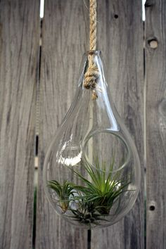 Hand Blown Glass Terrarium