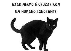 Isso é a verdade gatos pretos são uns amorzinhos azar e os gatos pretos que caem nas mão de pessoas que querem fazer coisas com eles!!  #gatospretosrespeitamos❤️