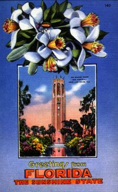 """Greetings from Florida!"" Postcard Collection. 