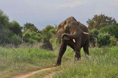 Neue Allianzen im Kampf gegen die Wilderei