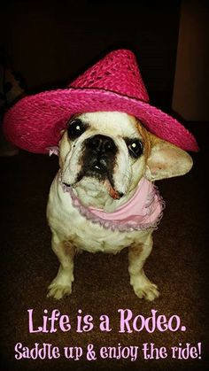 She looks good as a cowgirl #frenchbulldog #frenchie