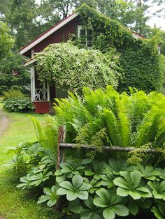 Use a fence (bright colored rod iron?) to protect and keep ferns back