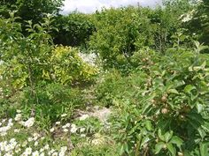 Help spread the permaculture word... | Permaculture Magazine. Maddy and Tim Hartland's permaculture garden pt. 1