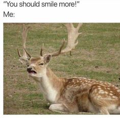 Memes Hilarious Can't Stop Laughing lol – Humor bilder Crazy Funny Memes, Really Funny Memes, Stupid Memes, Funny Relatable Memes, Haha Funny, Funny Stuff, Funny Office Memes, 9gag Funny, Animals Doing Funny Things