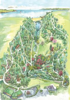 Garden Map - Trebah Garden Cornwall. Near the top of the valley, I encountered a very large stick insect, in a Katsura tree - amazing.