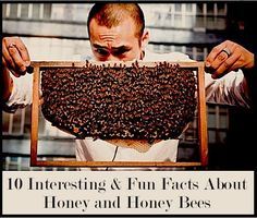 10 Interesting & Fun Facts About Honey and Honey Bees