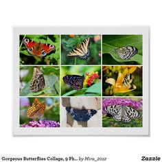 Shop Gorgeous Butterflies Collage, 9 Photos Poster created by Personalize it with photos & text or purchase as is! Get Well Gifts, Cool Gifts, Gifts For Coworkers, Gifts For Dad, Best Friend Gifts, Gifts For Friends, Buckeye Butterfly, Peacock Butterfly, Blue Tigers