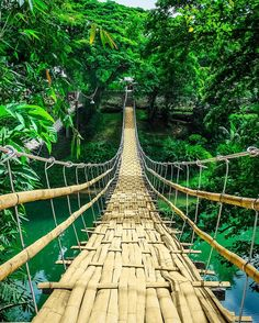 Travelers say the Bamboo Hanging Bridge in Tagbilaran City Philippines part of a Full-Day Bohol Countryside Tour on TripAdvisor is a must-try. Scared of heights? Just dont look down and youll be good!