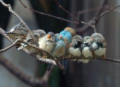 Siesta by Istvan Lichner, 1x #Birds