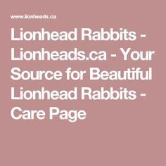 Lionhead Rabbits - Lionheads.ca - Your Source for Beautiful Lionhead Rabbits - Care Page