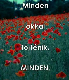 """""""Minden okkal történik.MINDEN."""" Positive Life, Good Vibes, Relationship Goals, Things To Think About, Motivational Quotes, Life Quotes, Positivity, Humor, Love"""