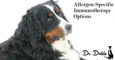 Allergen-Specific Immunotherapy for Dogs and Cats
