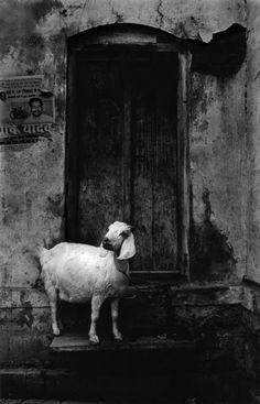 Anita Andrzejewska Black White Photos, Black And White, Famous Photographers, Monochrome Photography, Graphic Illustration, Fine Art, Painting, Animals, Image
