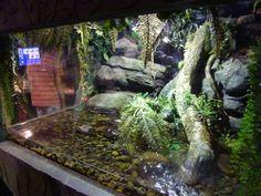 Caiman lizard enclosure