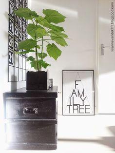 Hoog op mijn binnenplantenverlanglijst: een Kamerlinde