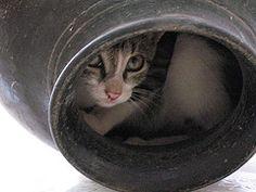 potty cat