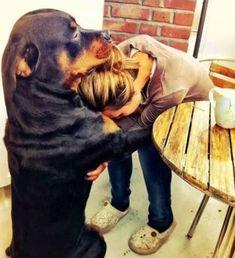 Rottweiler : On vous dit pourquoi il ne faut SURTOUT PAS en adopter un !