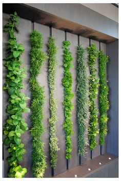 Look At The LG Eco-City Garden That Was Displayed During The 2018 Chelsea Flower Show This living wall in a kitchen can be used as an indoor herb gardenThis living wall in a kitchen can be used as an indoor herb garden