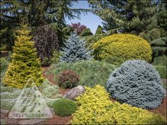 A summer stroll | The Amazing World of Conifers