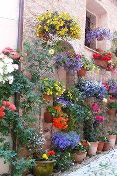 Flowerpot garden