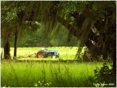 A daily occurrence. Look at the beautiful Spanish moss. Cotton Fields, Paint Color Schemes, Southern Pride, Georgia On My Mind, Las Vegas Trip, Spanish Moss, Back Road, World Photo, House Painting