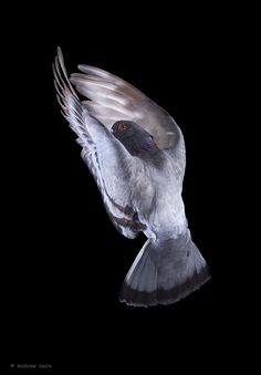 The New York Pigeon: An Exhibition Of Photos By Andrew Garn