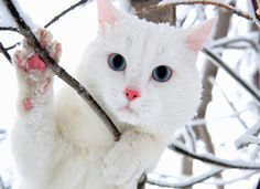 White Cat Wallpaper - beautiful desktop wallpapers 2014
