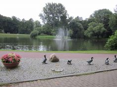 Ducks in Naleczow Spa Town, Poland