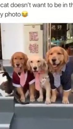 Super Cute Puppies, Cute Baby Dogs, Cute Funny Dogs, Cute Dogs And Puppies, Cute Funny Animals, Cute Puppy Gif, Adorable Baby Animals, Funny Animals With Captions, Funny Puppies