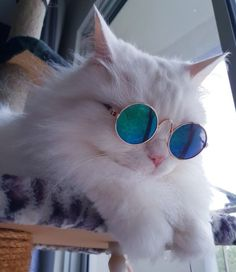 About cool pet sunglasses - Animals Pictures Cute Funny Animals, Cute Baby Animals, Funny Cats, Cute Kittens, Cats And Kittens, Ragdoll Cats, Siamese Cat, Gatos Cool, Cat Icon