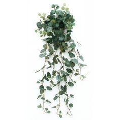 Plante retombante photo plante d 39 int rieur tombante fleurs roses - Tableau vegetal jardiland ...
