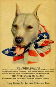 Patriotic Pitbull - America's first watch dog!