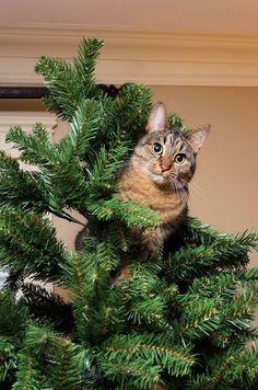 PERFECT CHRISTMAS TREE JEWELERY #cat kitty kitten cute funny