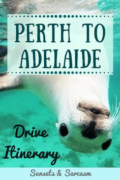 Plan your Perth to Adelaide road trip! This useful guide includes the best places to see in Western Australia and South Australia, driving times, distances, campsites, petrol and accommodation costs and how to cross the Nullarbor. Outback Australia, Australia Beach, Moving To Australia, Western Australia, Australia Travel, Queensland Australia, Australia Visa, Travel Expert, Budget Travel