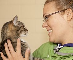 Cat Chat: Understanding Feline Language : The Humane Society of the United States