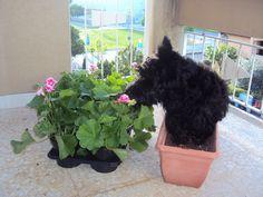 Wesley's planting flowers!
