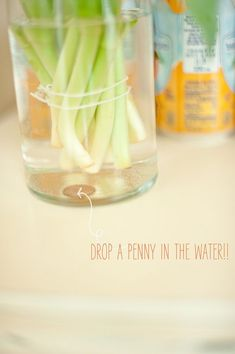 Diy Crafts Ideas     how to keep tulips from drooping stevie pattyn for shop sweet lulu    -Read More –
