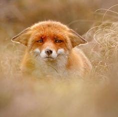 beautiful-wildlife:YodabyRoeselien Raimond
