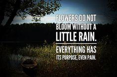 Flowers do not bloom...
