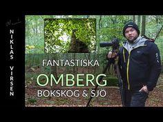 Fantastiska Omberg - Bokskog och Sjö - YouTube