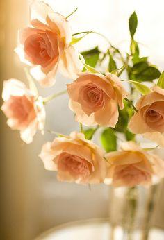 サーモンピンクの薔薇。