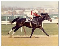 "The incomparable Ruffian. Heywood Hale Broun was one of the commentators for the CBS broadcast. Years later, reflecting on Ruffian's career, he said: ""The remarkable thing about Ruffian was that until the moment of the tragic accident, no horse had ever been in front of her. In her regal and majestic way she denied the lead to one and all. She was not going to allow it if it killed her. And it did kill her. As a sporting tragedy it is ahead of anything I can remember."""