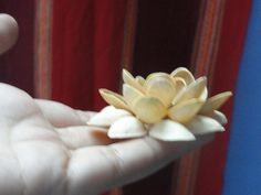 DIY: Pistachio Shell Flowers – Doses Of Randomness Paper Flowers Craft, Flower Crafts, Diy Flowers, Sea Crafts, Crafts To Make, Pista Shell Crafts, Pistachio Shells, Shell Flowers, Pine Cone Crafts